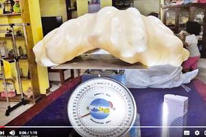 34公斤珍珠藏屋10年  菲漁夫不識天價寶物