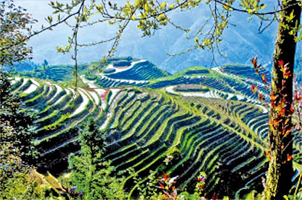 宜興山區青山逶迤,綠帶縈繞,有「茶的綠洲」美譽(Fotolia)