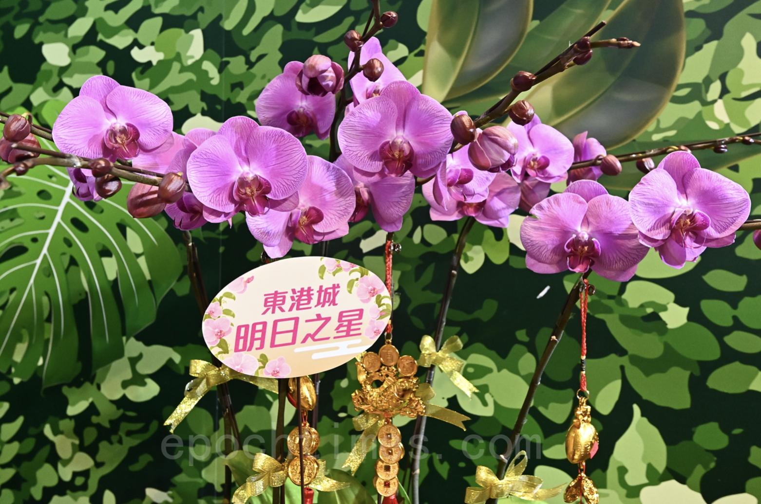 東港城將於1月22日至2月11日舉行「東港城新春花市限定店」。(宋碧龍/大紀元)