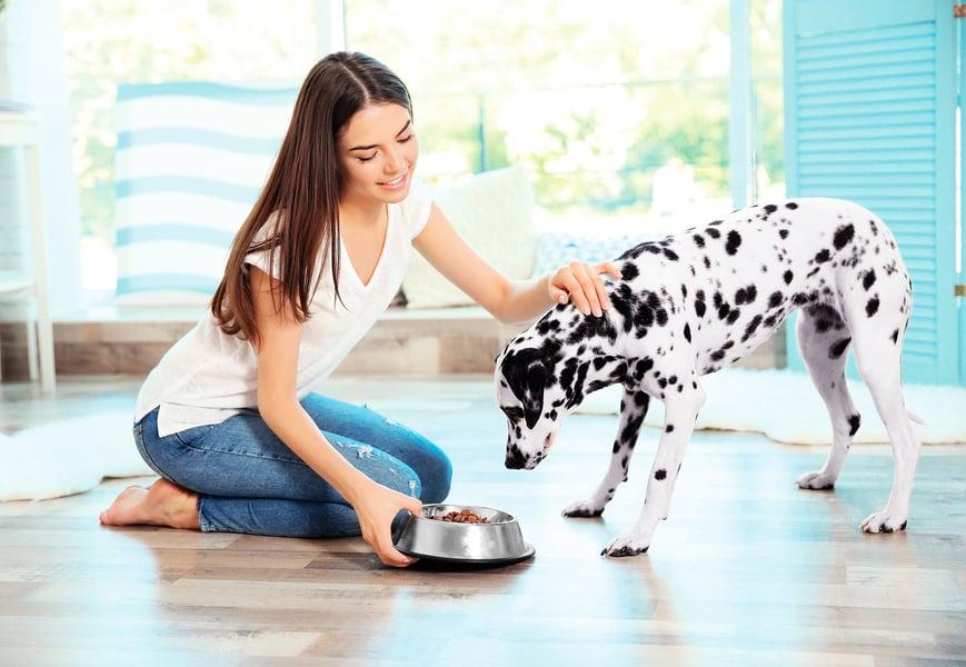 飲食影響寵物健康 狗狗餵食的常見問題