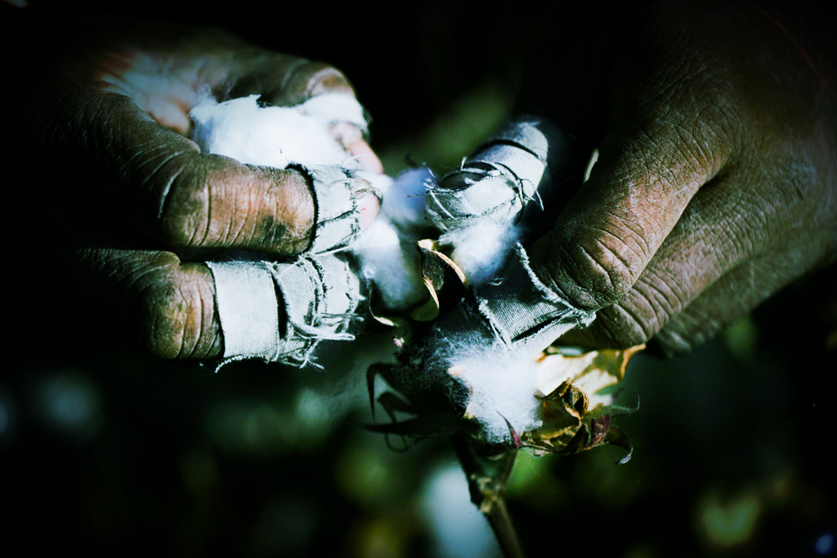 美禁止進口新疆棉花等,禁令將對歐美服飾品牌等產生深遠影響;H&M、Muji、Uniqlo等服飾曾以「品質著稱」的新疆棉為賣點,背後藏黑暗產業鏈。(大紀元製圖)
