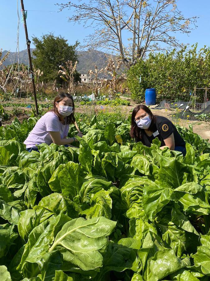 網上預約報名「有機蔬菜園開放日」,可參與一系列親子共樂的趣味活動。(潘媽媽果園提供)