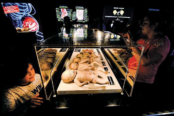 圖為南美哥倫比亞波哥大的屍體展,一名小朋友在看展示的嬰幼兒屍體。(JUAN BARRETO/AFP via Getty Images)