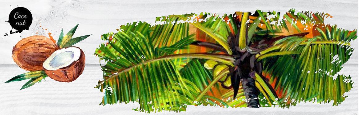椰子的幻想世界