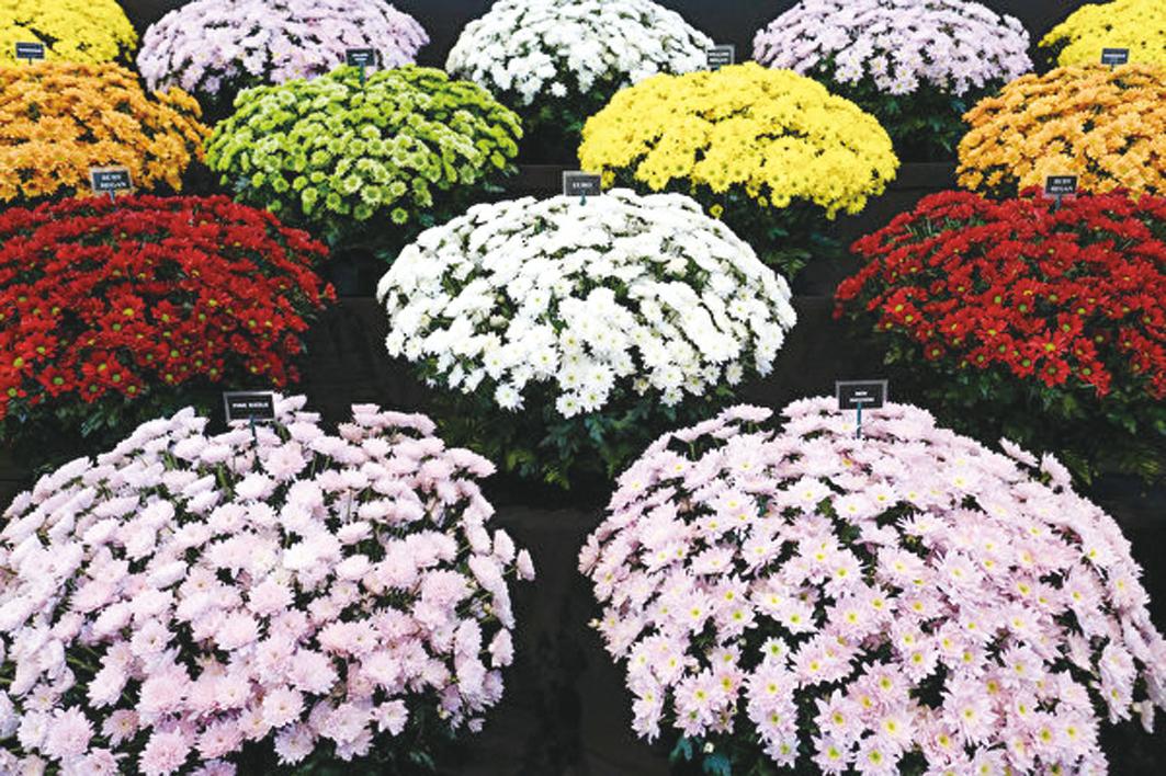 稍早前,武漢當地人買花祭奠去世親人致全城鮮花斷市,引發外界對武漢市中共肺炎真實死亡人數的質疑。圖為示意圖。(Ian Forsyth/Getty Images)