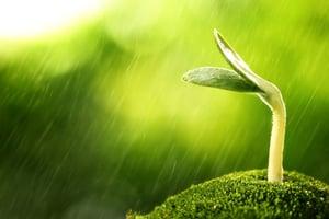 雨水時節草木萌生 順應四時調養身心