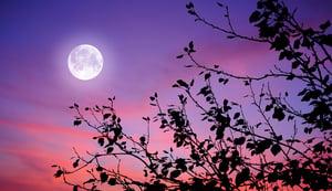 遙視月球 超能力者驚出冷汗