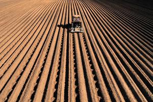 大量仰賴外國種子 中國難以解決糧食危機