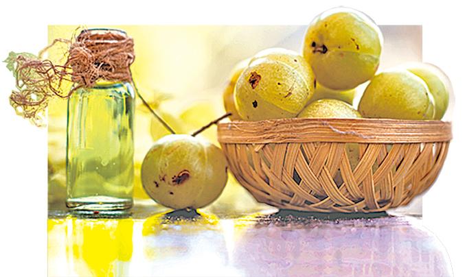 能夠增強免疫力的印度油甘果。