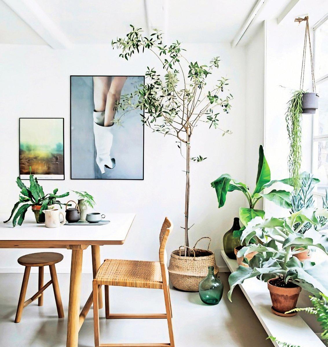 直線條的家具帶來嚴謹的氣氛,而直立型的植物也給人相同的感受。