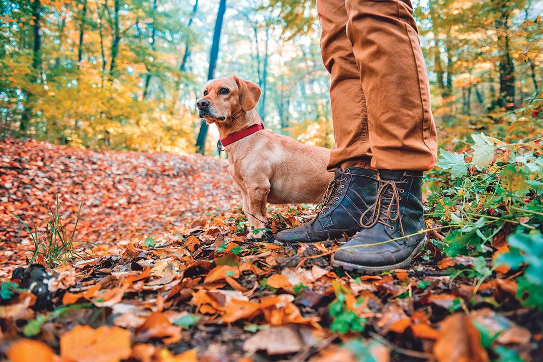 帶小型犬出門踏青,應儘量走地勢較平坦的路線。