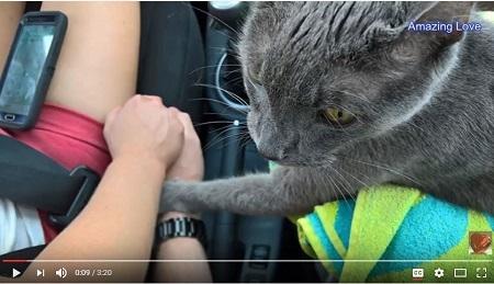 近日,一位痛失愛貓的網友向社交網站上傳了一張照片。照片顯示,他的愛貓臨終前,似乎感到將與主人永別,伸出前爪握著他的手,似表達不捨,場面令人動容。(YouTube視像擷圖)