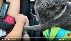 令人動容!小貓臨終前握主人手訣別