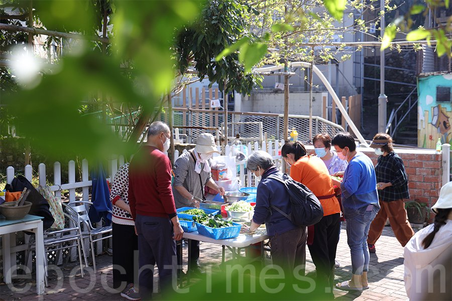 薄扶林村民在菜園地製作菜茶。(陳仲明/大紀元)