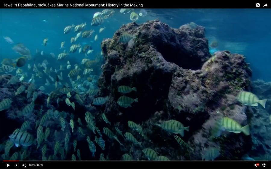 美國總統奧巴馬周五(26日)宣佈,將夏威夷州外海一處國家海洋保護區的面積擴大4倍,創設全球面積最大的海洋保護區。(YouTube視像擷圖)