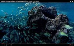 美國創設全球最大海洋保護區