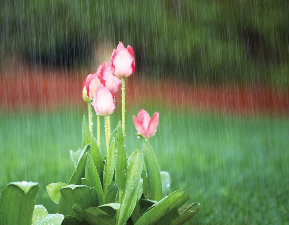 撥弄琴弦,滴滴達達,低低答答……濕濡悄聲對話,雨水說些甚麼?這一時刻,似乎合宜寫詩,十行就好。(fotolia)