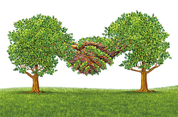 【萬物有靈】科學實驗證明樹會交流