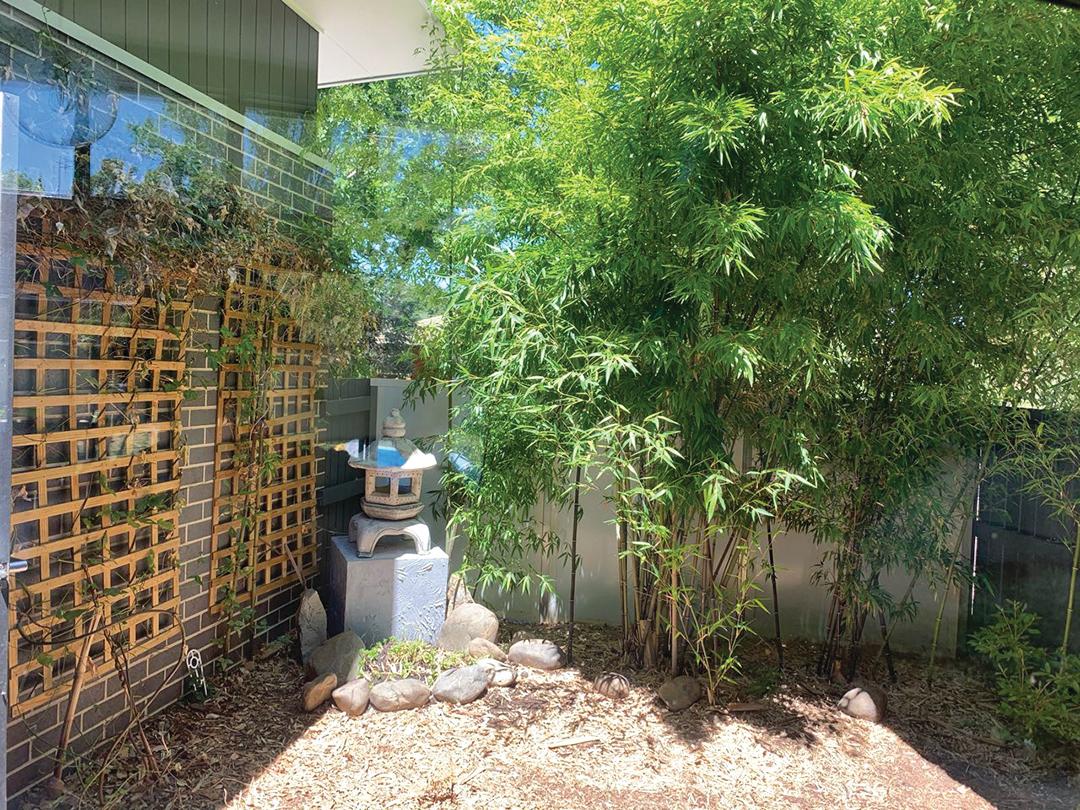 Jasmin日式風格的小院子。