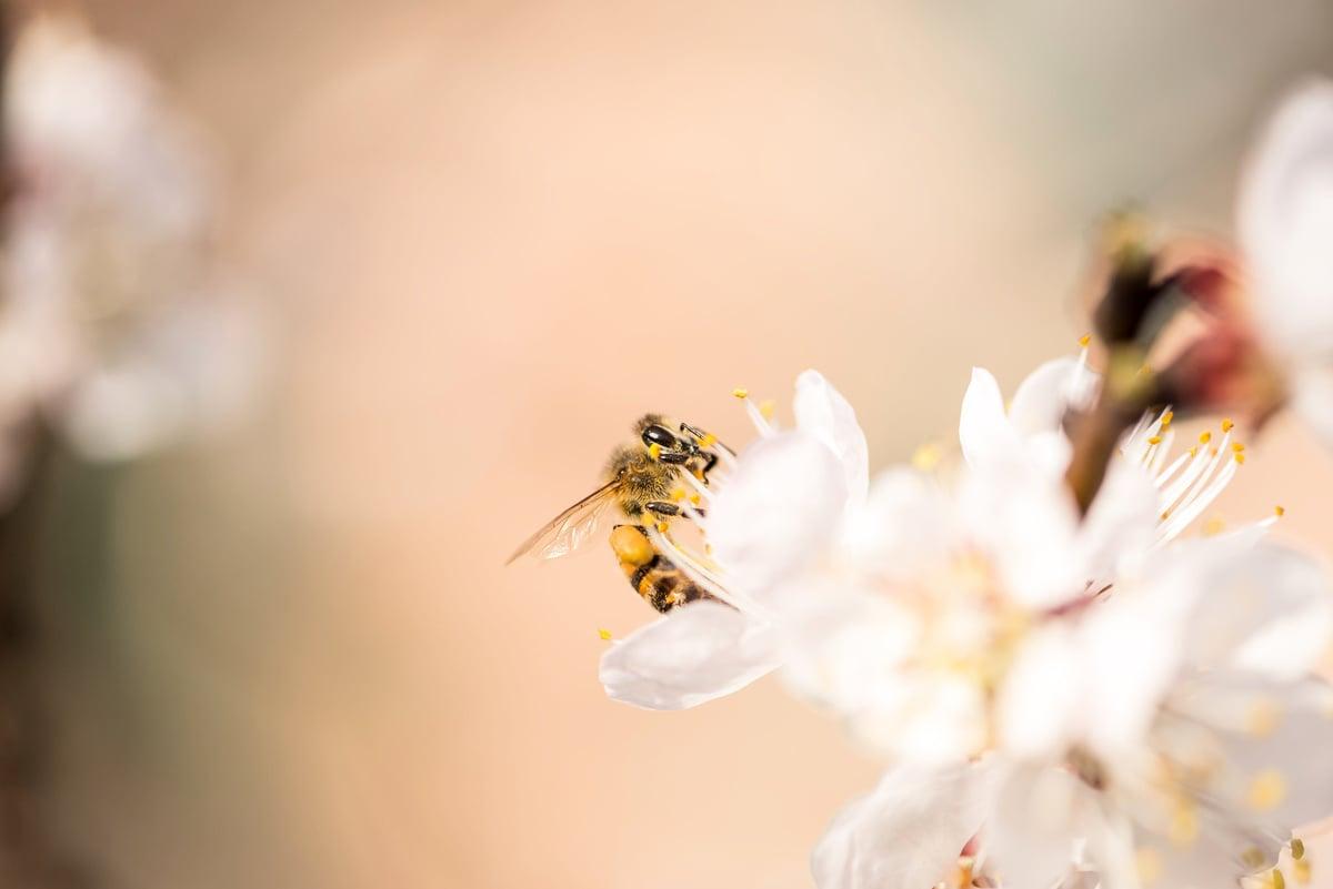 今年「驚蟄」節氣在3月5日,此時天氣回暖,春雷始鳴,驚醒蟄伏冬眠的生物,草木也競相舒展。在這一天人們會做些甚麼?此節氣又該吃些甚麼來養生養顏呢?(Fotolia)