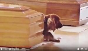 主人地震中遇難 忠犬伴靈柩不離不棄