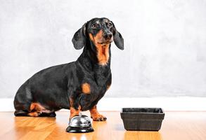 自製狗狗鮮食 改善毛小孩肥胖問題