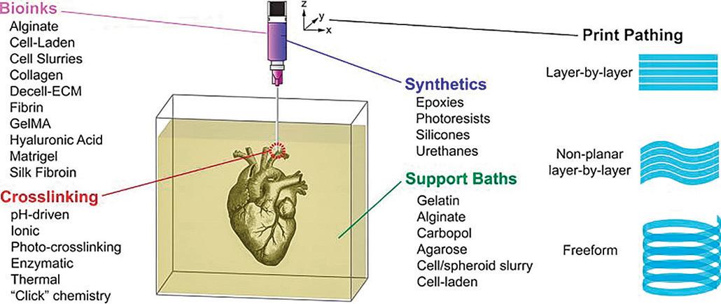 三維列印技術 在水凝膠內列印器官