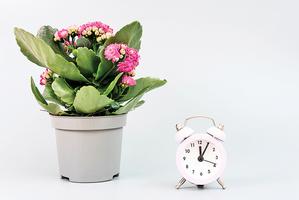 研究:植物睡覺前給自己上鬧鐘