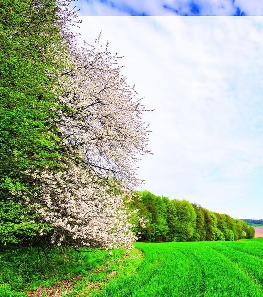 春在枝頭源何處