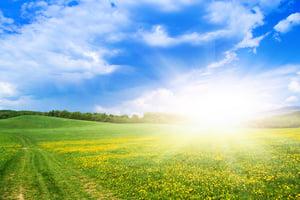 春分陽氣升 養生需滋養肝陰