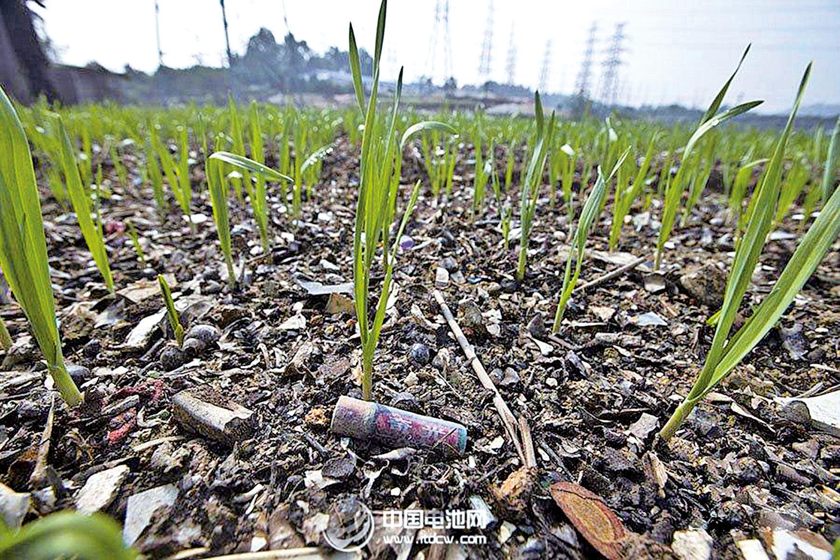河南新鄉被稱為「中國電池工業之都」,土壤中鎘含量超標,生產的小麥鎘含量超標,事件並不令人意外,僅僅是河南重 金屬污染的冰山一角。( 網絡圖片)