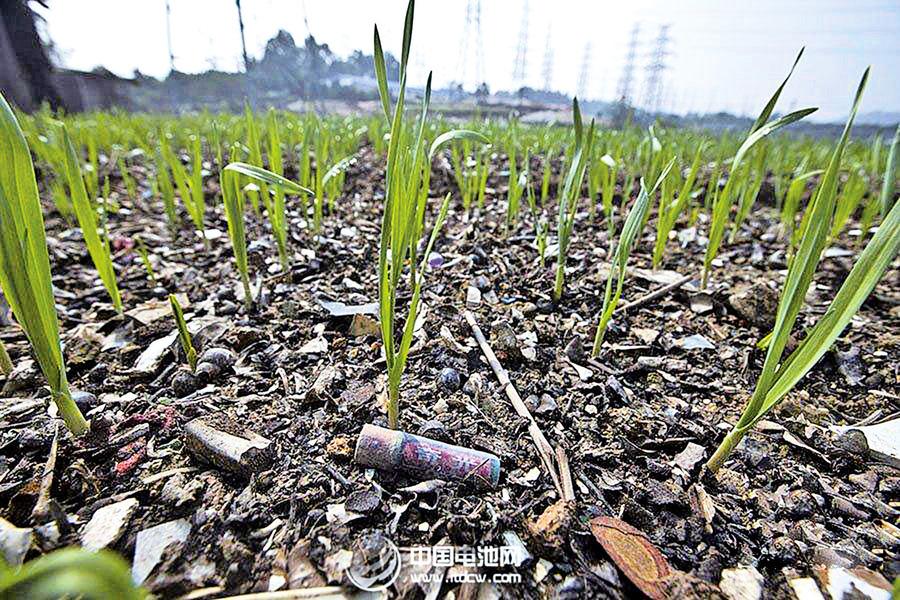 河南新鄉小麥鎘超標34倍