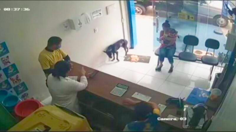 小狗自己走入獸醫診所求救。(影片截圖)