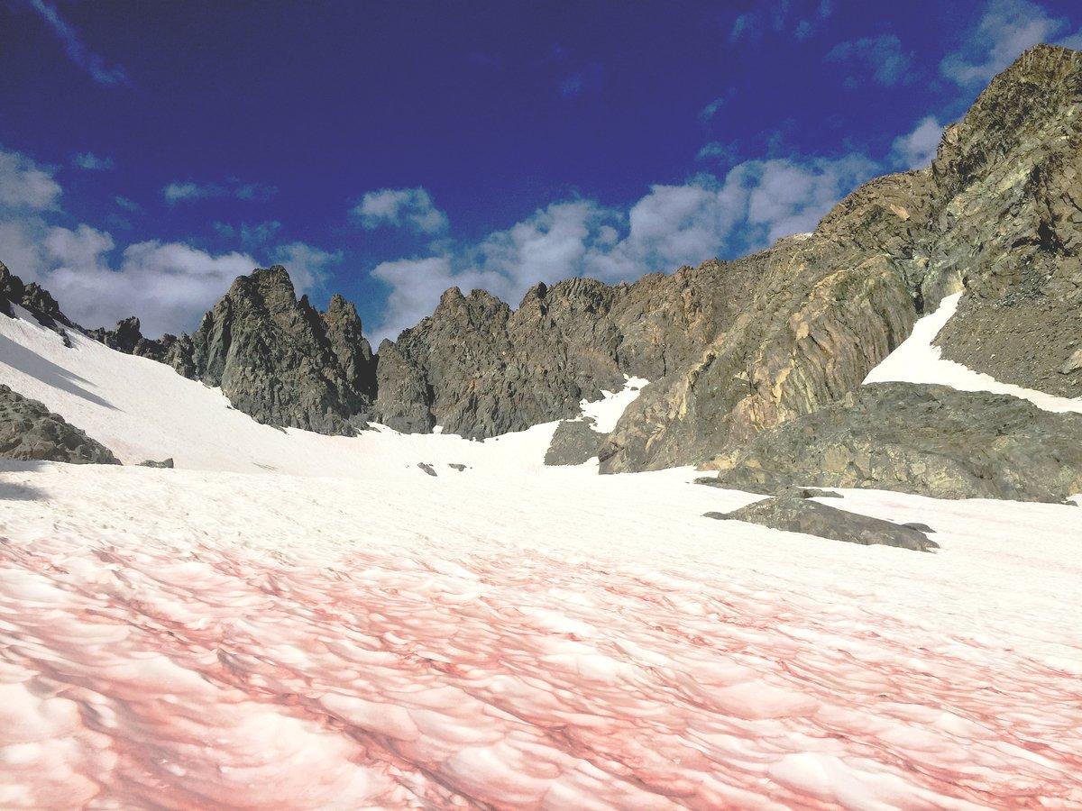 南極頻頻出現「血雪」,這種情況也發生在其它高原地區,科學家對此非常緊張。圖為在加利福尼亞州里特山(Mount Ritter)上拍攝到的「血雪」,也稱「西瓜雪」。(Paul Wade / USDA)