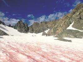 南極罕見「血雪」 預示什麼可怕事情?