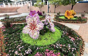 2021網上花展明舉行 全港設20個園林花圃可就近賞花