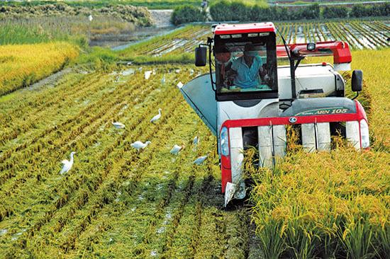 中共為吸引台灣農業,祭出優惠措施,其實是為了取得技術和經驗,最後取而代之。(中央社)