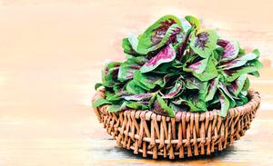 紅莧菜含鐵量是蔬菜之冠   搭配兩種食物補鐵效果更好