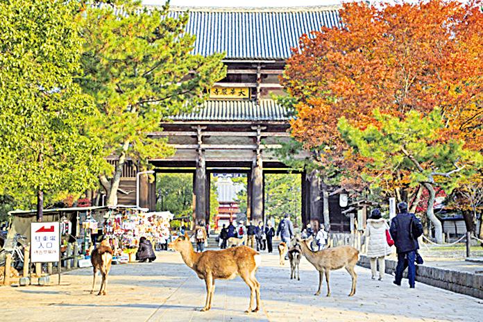 日本京都奈良等地推「清晨觀光」