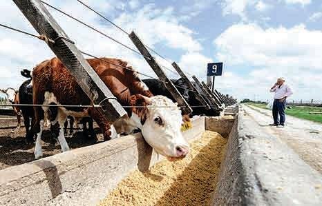 疑缺糧 中共要求飼料減粟米豆粕用量