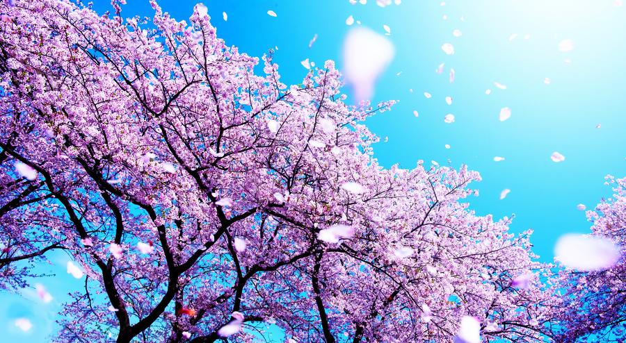 【七律】春風