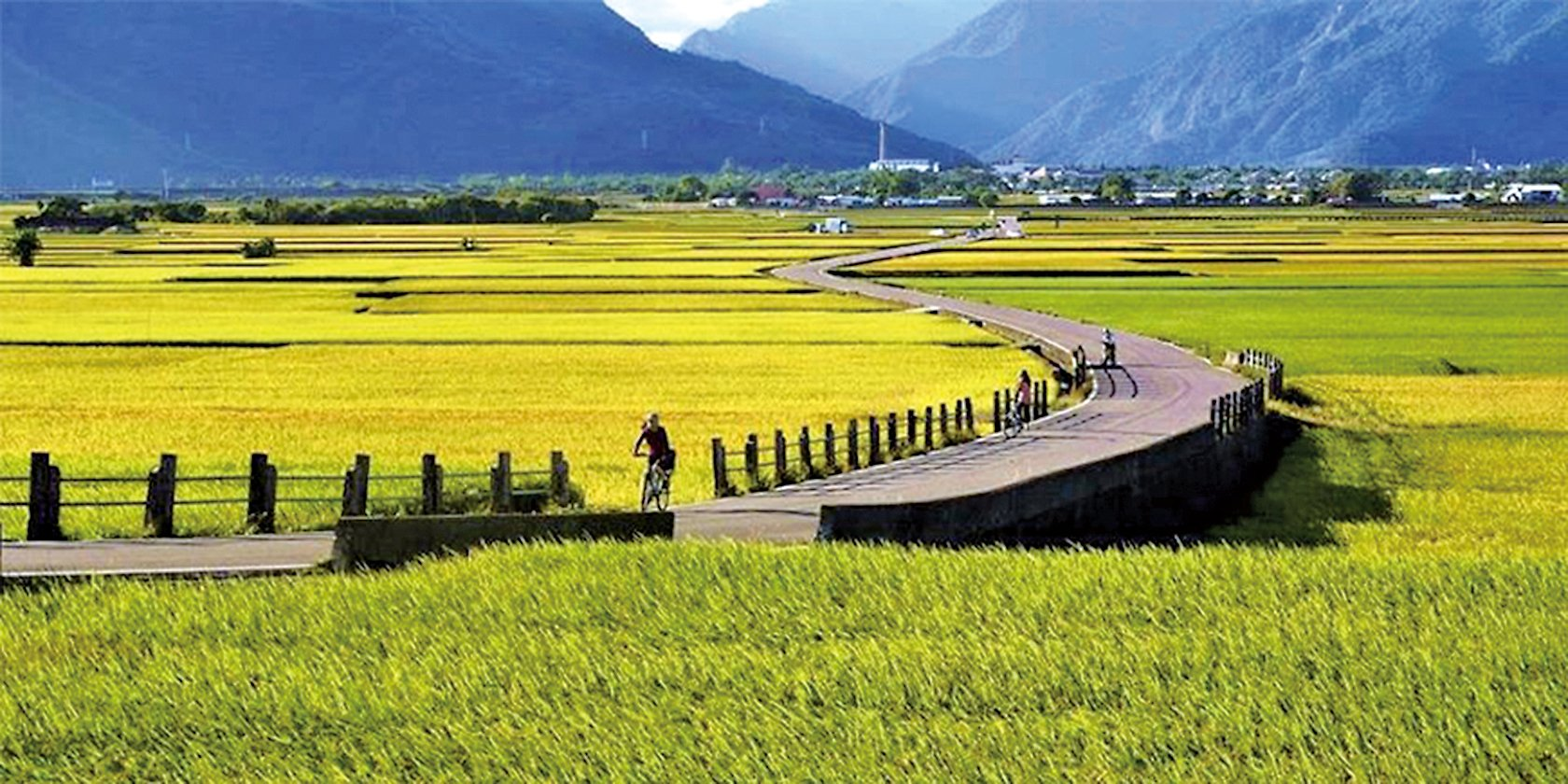 池上伯朗大道的黃金稻浪(台東縣政府提供)