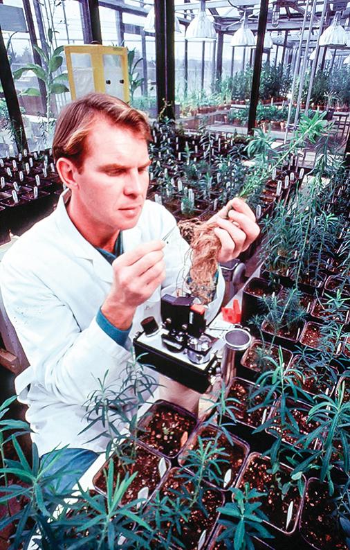 在中共的體制下,沒有人願意下功夫培育種子、做科研。圖為美國科學家在研究農作物。(Getty Images)
