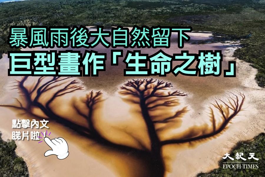 【影片】暴風雨後大自然留下 巨型「生命之樹」畫作