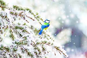 【青松絮語】與雪共舞