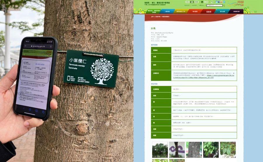 發展局推二維碼「樹牌」 冀市民加深樹木了解協助護養