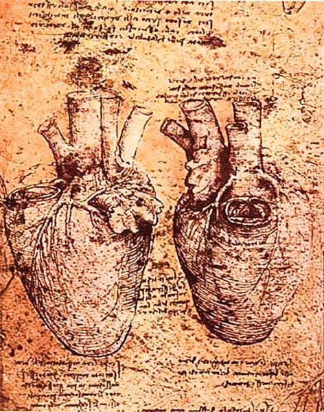 分形論揭開達芬奇 五百年前所繪心臟結構之謎
