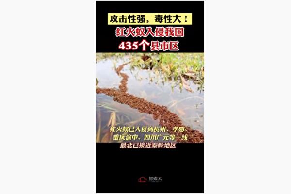 大陸紅火蟻肆虐 蔓延至12省435縣市