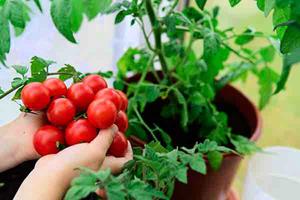 日企KAGOME挺人權 宣佈停用新疆番茄