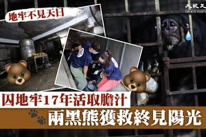 囚地牢17年被取膽汁 兩黑熊獲救終見陽光